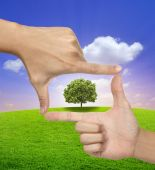 A Big Tree in a frame of human hands — Stock Photo