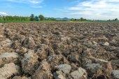 Field — Stock fotografie