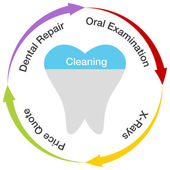 Dental Chart — Stock Vector