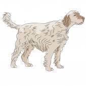 Shaggy Haired Dog — Stock Vector