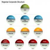 Regional Org Chart — Stock Vector