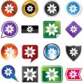 Poinsettia web button — Stock Vector
