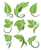 Vector collection of green leaves, nature and beauty — Stock Vector