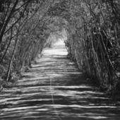 Bosque oscuro — Foto de Stock