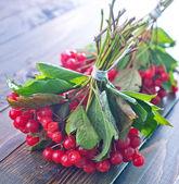 Arándano rojo crudo — Foto de Stock