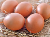 Raw chicken eggs with brown shells — Stock fotografie