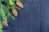 Fir tree branch with fir cone — Stockfoto