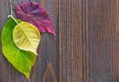 Bladen på trä bakgrund — Stockfoto