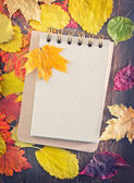 Autumn leaves and notepad — Stock Photo