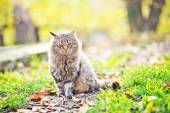 Cat outdoors in autumn park — Stock Photo
