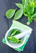 Fresh basil in bowl — Stock Photo