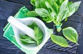 Fresh basil in bowl — Stock Photo