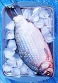 Roher fisch auf eis — Stockfoto