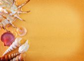 Yellow sand and sea shels — Stock Photo