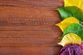 Autumn listowie na drewniane tła — Zdjęcie stockowe