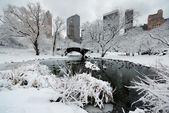Invierno del parque central — Foto de Stock