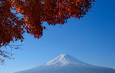 Mt.Fuji and Maples — Stock Photo