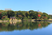 Herbstlaub in Hamarikyu Gärten, Tokyo — Stockfoto