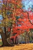 Autumn leaves in Musashino park, Tokyo — Stock Photo