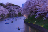 Cherry blossoms in Tokyo, Japan — Стоковое фото