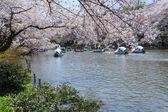 Cherry blossoms in Tokyo — Foto de Stock