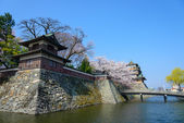 Cherry blossoms and the Takashima Castle — Stock Photo