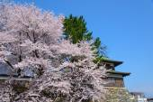 Cherry blossoms at the Takashima Park — Stock Photo