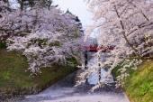 Cherry blossoms at Hirosaki Park — Stock Photo