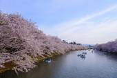 Cherry blossoms at Hirosaki Park — Stock Photo