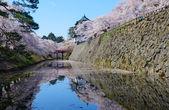 Cherry blossoms and Hirosaki Castle — Stock Photo