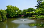 Okazaki Park with tender green in Aichi, Japan — Stock Photo