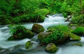 Oirase gorge in Aomori, Japan — Stock Photo