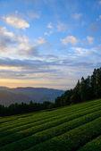 Sea of clouds and Tea plantation — Stock fotografie