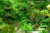 Gora Park in Hakone, Kanagawa, Japan — Stock Photo