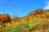 Autumn foliage in Aomori, Japan — Stockfoto