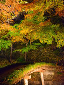 Autumn foliage in Rikugien Garden, Komagome, Tokyo — Stock Photo