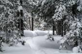 Snowshoe trail — Stock Photo