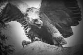 Eagle als een symbool van macht, macht en grootsheid — Stockfoto