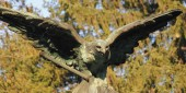 Eagle as a symbol of power and grandeur — Stockfoto
