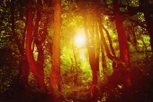 Majestic colorful forest with sunny beams. Dramatic evening fore — Stock Photo