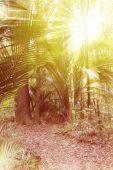 Džungle — Stock fotografie