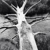 Fallen log — Stock Photo