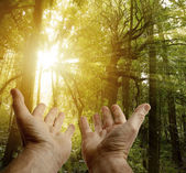 Hands in forest — Stock Photo
