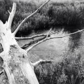 Log over stream — Stock Photo