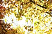 Sunlit leaves — Stock Photo