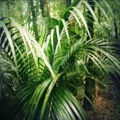 Jungle — Stock Photo