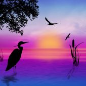 Egret silhouette on sunset — Stock Photo