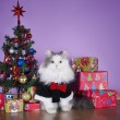 Cat in a knitted sweater with gifts at Christmas tree — Stockfoto #59843657