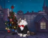 Cat and Christmas tree on the roof at night — Stock Photo