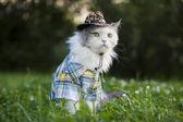 Bahar çimen kedi — Stok fotoğraf